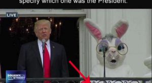 Which one is Trump? Funny haha lmao humor pics President Donald Trump uber funny