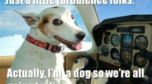 Of The Happiest Dog Memes That Will Keep You Laughing For Hours