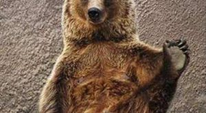 "What a silly #bear "" #bear. #funny "" #funny #animals ""…"