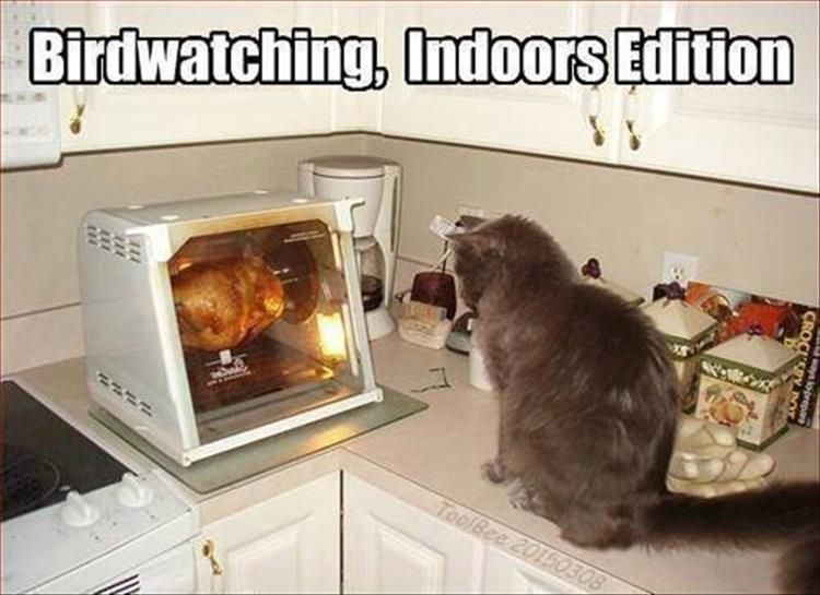 Is it permissible to have a cat supervising a broiler unit? Do you have…