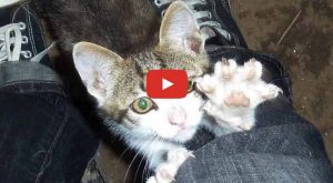 Rilu was found on the side of a road  years ago, when he…
