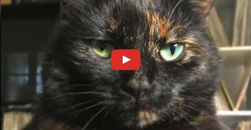 Baloo the cat, who loves her human very much, was mystified as to why…