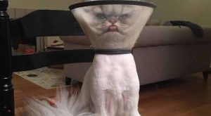 """This is Albert and he's not having the best day #cats """"> #cats…"""