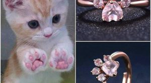 Is there anything cuter than kitty paws?get this adorable kitty paws ring today at…