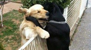 Funny animals Memes  pict | Funny Pictures Check out for amazing and funny…