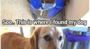 Funny Dog Memes Pictures, Funny Picture, Have Funs, and Images for Facebook, Tumblr, Pinterest, and Twitter