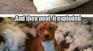 Really funny Tumblr memes that get dogs just right : theCHIVE