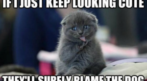 Animals Memes That Are Cuteness Overload –