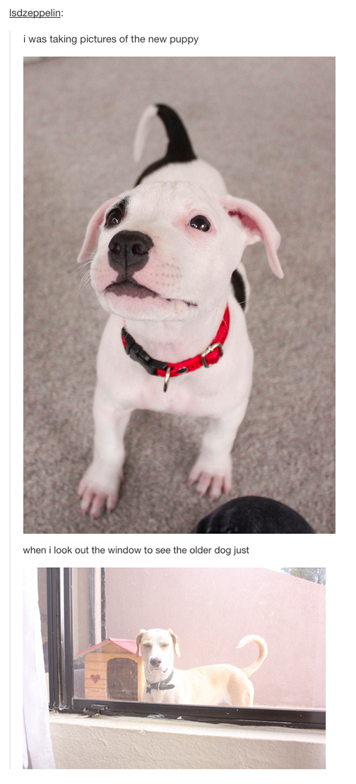 Times Tumblr Told The Truth About Dogs – somebody's a bit jealous
