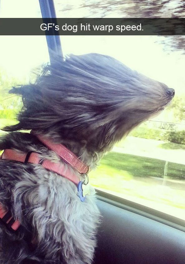 """SnapDogs – Funny Dog Pictures of Snapchat #funnydogs """"> #funnydogs"""