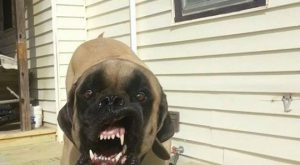 Dogs Caught Mid Sneeze or Yawn Are Actually the Stuff of Nightmares