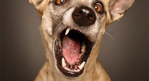 Expressive Dog Portraits by Elke Vogelsang
