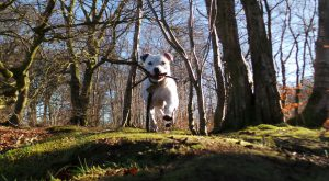 """Looking at Jake Dogs Trust #rehomeadog """" #rehomeadog Jake does not like other…"""