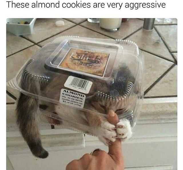 Aggressive almond cookies – Funny Joke Pictures