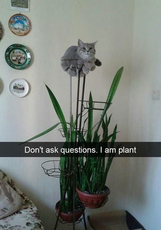 Just beginning to melt – funny cat meme pictures