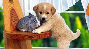 "#Animal ""> #Animal #Puppy ""> #Puppy #Bunny ""> #Bunny #Love explore…"