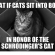Funny Schrodinger's Cat Memes of  on | Schrodinger Cat
