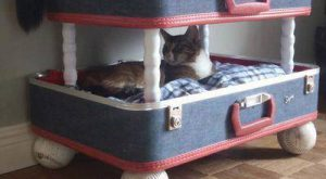 Ok. This cat bunk bed has to be the epitome of Re-use