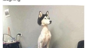 This poor dog. Lol |Humor|Funny memes|Funny pictures|Dog humor|