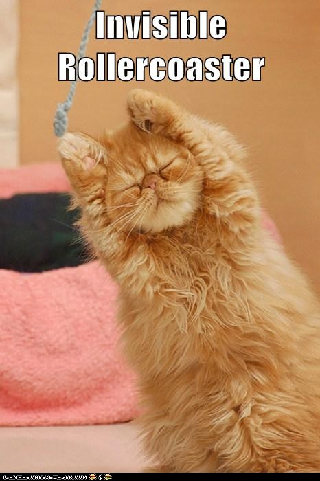 funny cat pictures – Invisible Rollercoaster