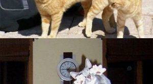 perfectly timed cat photos…