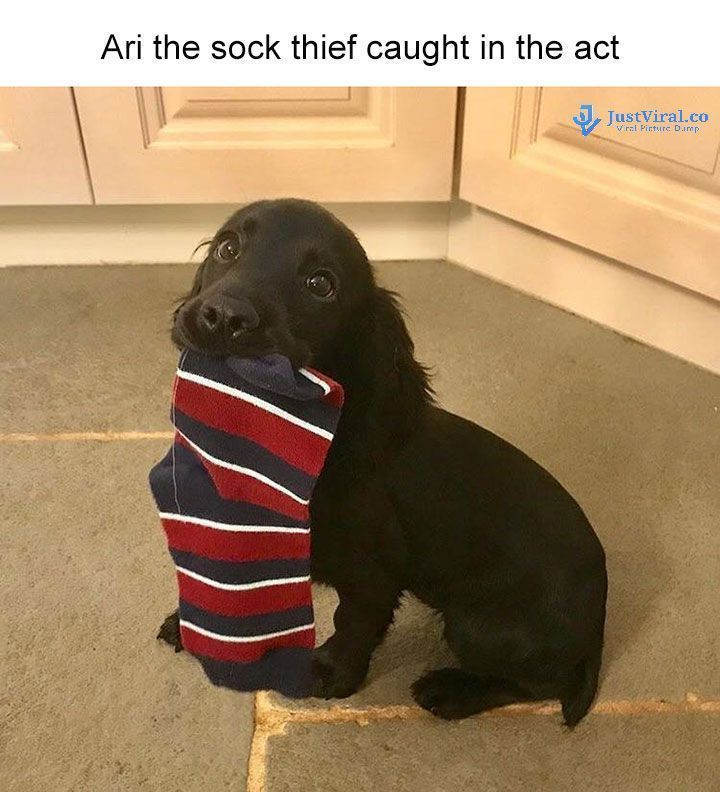 """Funny Dog Memes That Will Cure Your Bad Day –  #funnydogs """">…"""
