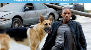 I am Legend WTF fun facts