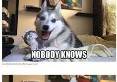 Pun Dog Puns That Will Instantly Brighten Your Day!