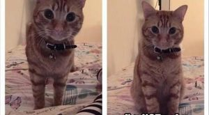 """Funny Pictures Of Today – #funnymemes """" #funnymemes #funnypictures """" #funnypictures…"""