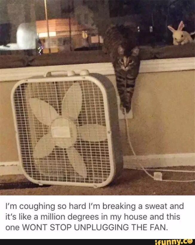 Asshole cat won't stop unplugging fan