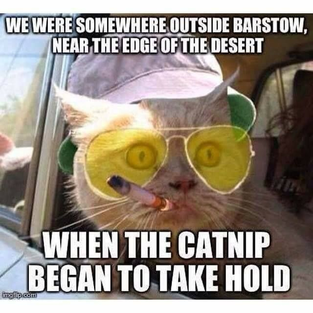 Hunter S. Thompson cat – What more to say other than we just LOVE…