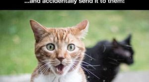 Hilarious Cats Who Behave Exactly Like Us At Work cute animals cat cats…