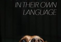 WAYS TO TELL LYOUR DOG YOU LOVE THEM IN THEIR OWN LANGUAGE -…
