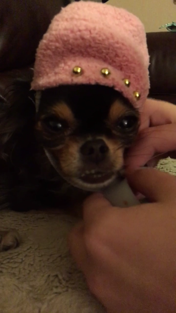 Make Your Pup a Sock Hat