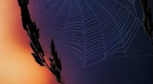 spider web / Overlooked Treasures