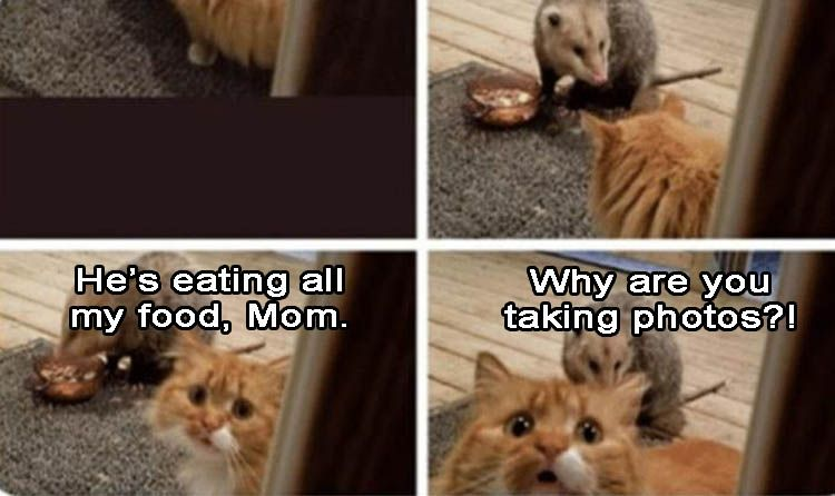 Funny Animal Picture