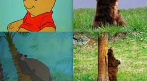 Disney Animals in Real Life
