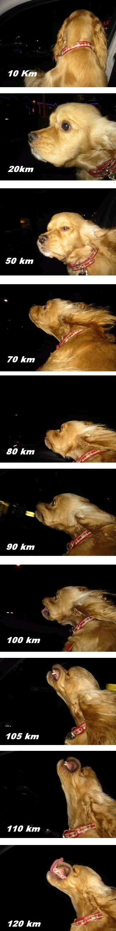Dog vs. speed. And then you crash at km/h since you are too busy…
