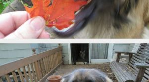 Dog Regrets His Decision funny dog lol humor funny pictures funny photos funny images…