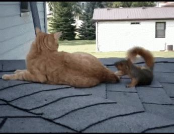 An oddly amenable cat playing with a squirrel. | Animal GIFs That Will Warm…