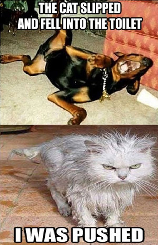 Funny animal captions – part  ( pics), animal pictures with captions, funny…