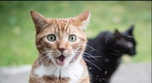 hilarious cats who behave exactly like us at work