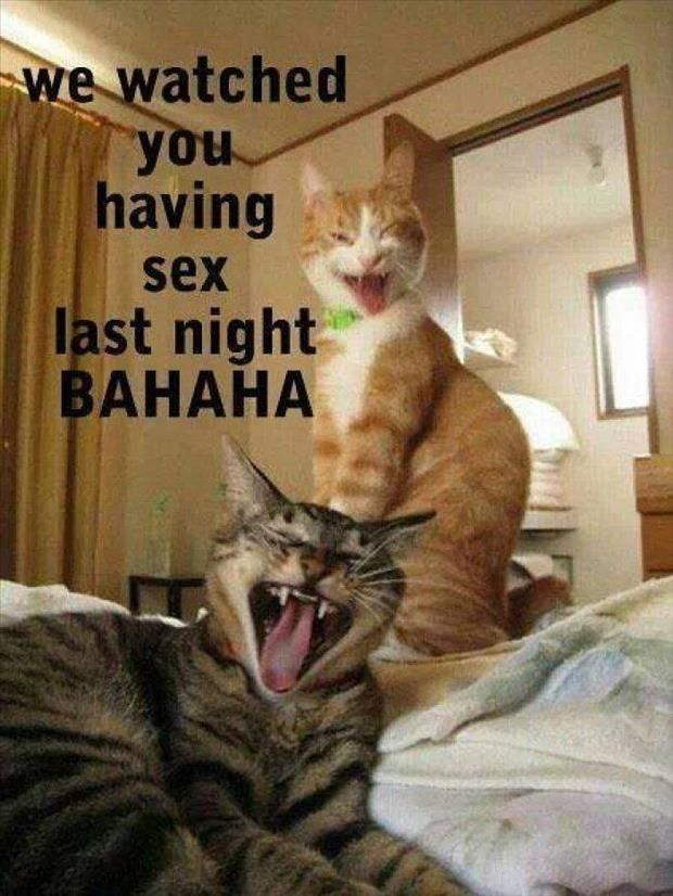 Animals With Funny Captions