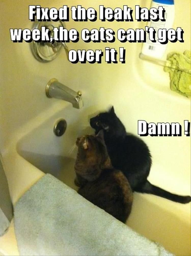 funny animal pictures ()
