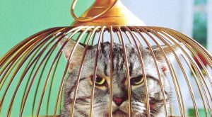"""Don'T Ask"" Avanti Funny Friendship Card Cat In Birdcage"