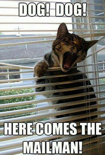 The never ending battle between cats and blinds ( Funny Picture, Have Funs)