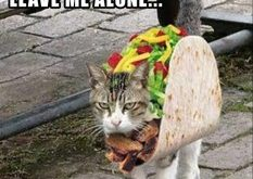 taco cat doesn't want to taco about it