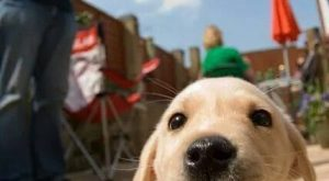 """Funny Dogs Pictures 
