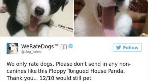 Times people failed to send dog pics to 'We Rate Dogs' #memes #humor explore…