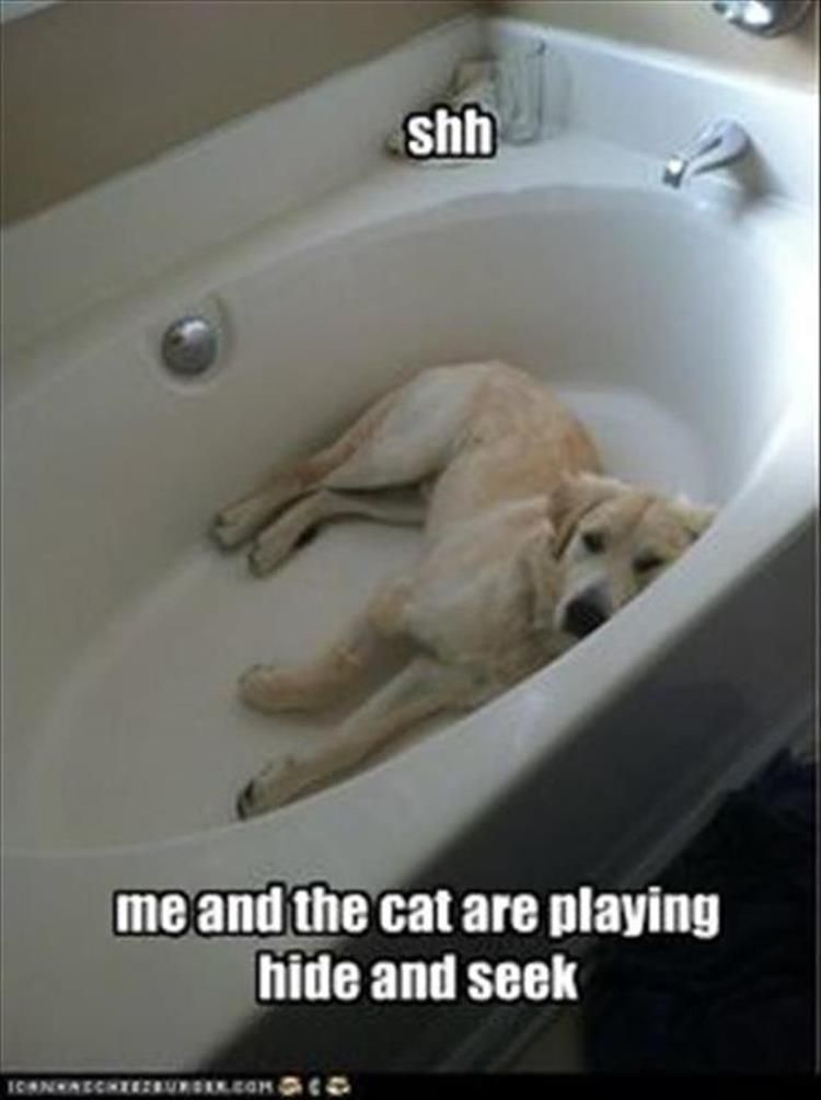 "Afternoon Funny Animal Picture Dump   #funnydogshaming "" #funnydogshaming"